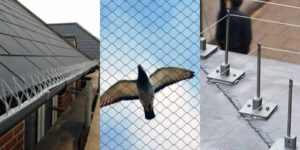bird_proofing_cape_town